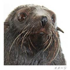 京都水族館入場券付き 宿泊プラン \選べる朝食付/ ファミリーやカップルにもおすすめ!