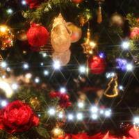 クリスマス期間限定プラン♪シェフ特製「X'masディナースペシャルコース」貸切風呂無料♪