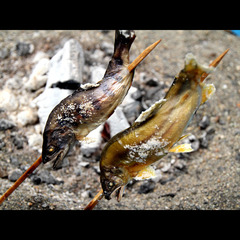 那珂川名物の鮎が1尾&馬刺し付でこのお値段?!とちぎの旬の味覚を堪能【ホンモノを楽しむ旅】