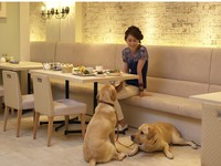 【スタンダードプラン】愛犬と食事も寝る時もずっと一緒  /朝食付