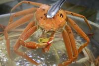 福井県漁連ブランド!!黄色いタグ付き越前蟹フルコースハーフプラン♪♪
