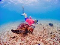 【ファミリー】【体験】【グループ】海ガメと一緒に泳ぐフォトツアープラン