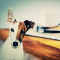 【楽天限定】【45日前の早い予約でお得★スタイリッシュな愛犬旅行】≪ポイント10%!≫土曜日OK♪