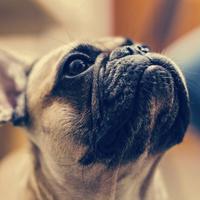 【ポイント10倍】《モニタープラン》愛犬2匹目まで無料★露天風呂付き客室でお部屋食&和洋折衷会席★
