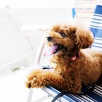 【愛犬と一緒に無人島へ上陸!★いざ!雄大な海へ!】贅沢!安心!桜島を海から望む錦江湾クルーズにGO!