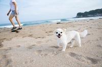 【大切なワンちゃんとご一緒に】ペットと過ごすビーチリゾート 朝食付