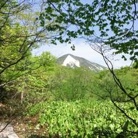 【朝食なし】早めにお出かけの方必見!八甲田登山&ハイキングプラン【夕食のみ】