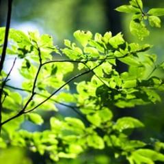 グリーンシーズンを満喫☆自由気ままな戸隠の旅♪素泊まりプラン