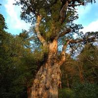 【縄文杉に行く!】推定樹齢7200年の歴史を訪ねるロングコース!