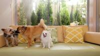 【ゴールデンウィークStay】愛犬とゆったり過ごす!1泊2食プラン(5/1〜5/4)
