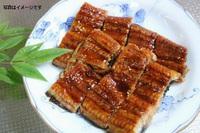 6・7・8月【大隅産うなぎの蒲焼付きプラン】料理長おすすめ(2食付)♪「志布志の宝石箱」お魚コース♪