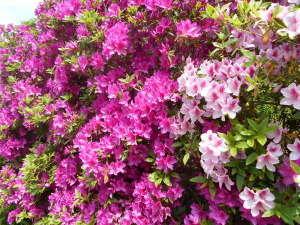 【現金特価】食事と咲き誇る花でおもてなし♪1泊2食付きプラン!