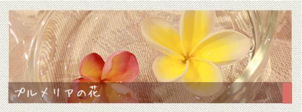 ★プルメリアの花★
