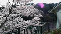 【スタンダード2食付き】大自然に囲まれたレイクビューの温泉満喫!山川の幸をご堪能♪春は桜が満開