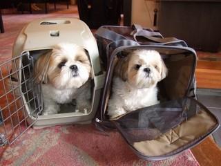 現金特価【3室限定】ペットも旅行に連れてって〜♪犬・猫ちゃん同宿プラン☆お食事も個室で!