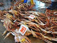 ◆越前蟹◆極上★皇室献上蟹級★ゆでたてアツアツコース【1,2キロ級】 大きさにびっくりタグ付き越前蟹