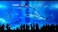 【沖縄美ら海水族館チケット付】沖縄の大自然を満喫プラン(素泊まり)
