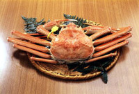 【越前蟹フルコース】越前がにの本場越前がに浜富☆豪華越前蟹料理〜焼き・刺し・湯で・蟹釜飯【お部屋食】