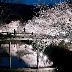 【お花見プラン】桜の時期にあわせて2段のお花見弁当を付けた1泊朝食付きプラン