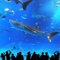 絶景プライベートヴィラ【美ら海水族館チケット&朝食付】【ジャグジー付】