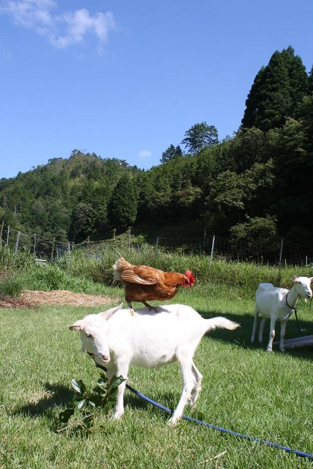 Farm-Inn Torikotoya Farm-Inn Torikotoya