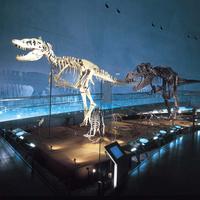 【恐竜博物館チケット付き】巨大恐竜ジオラマが楽しめる!壮大なスケールで迫力満点★