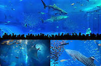 【ジンベエザメやマンタに会いに行こう!】美ら海水族館入場券付プラン(夕・朝食付)オリジナルルーム利用