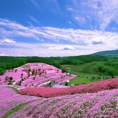 春爛漫★ピークをずらして!ひがし北海道花めぐりの旅 夕朝食付き