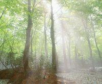 【2連泊限定】残雪と新緑のブナ林を散策 緑色のシャワーを浴びよう!