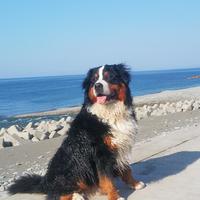 【ペットプラン★お日にち限定】2匹まで同室OK!≪愛犬と日本海をお散歩♪≫1泊2食付