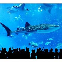 美ら海とくとく5パスプラン【美ら海水族館+人気観光4施設入場券】