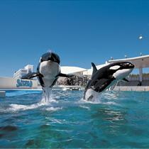 【白イルカのいる水族館☆海のなかまに会える!】鴨川シーワールドプラン