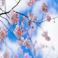 ■宿クーポン使えます!春のキラキラお祝いプラン〜卒業祝い歓送迎会「似顔絵」メッセージケーキでお祝い〜