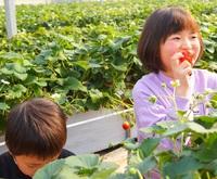 【お日にち限定】いちご農家三浦さん家のとってもあま〜い『気仙沼完熟いちご』食べ放題体験付プラン