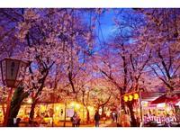 桜の名所!徒歩3分!特典付き「平野神社」桜ライトアップ記念プラン(素泊り)