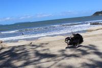【素泊まりわんちゃん宿泊代無料】〜愛犬と一緒に過ごす贅沢なひととき〜