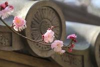 【平日限定】お花見スペシャルプラン 桜満開の鎌倉を平日ゆったり堪能