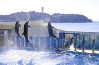 【新江ノ島水族館】えのすい入場券付き宿泊プラン(朝食付き)