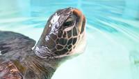 【大分県在住者限定】ウミガメ飼育員さんのおしごと体験プログラムにお申込できるご宿泊プラン
