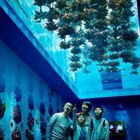 『仙台うみの杜水族館』の入館引換券付プラン♪ 緑水亭に泊まったあとは水族館へ出かけよう!