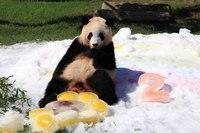 パンダに会いに行こう!「アドベンチャーワールド入園券付」宿泊プラン(2食付)