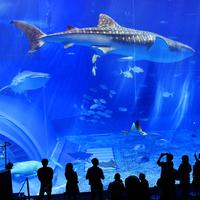 素泊まり◆美ら海水族館まで歩いて約10分!1日1組限定の宿◆