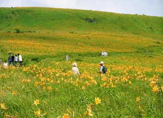 【信州涼】標高1650m!霧ヶ峰高原の夏・お花畑プラン
