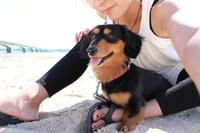 【大切なペットも一緒に沖縄リゾートSTAYプラン】