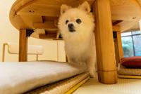【仕出し朝食付き】 ペット(愛犬・愛猫)と泊まれる京町家一棟貸し(夕食なし/禁煙/駐車場有)