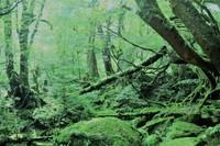 学生応援プラン !屋久杉でできた広く静かなお部屋です