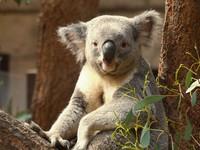 【東山動植物園入園券付きプラン】ファミリーやカップルにオススメ☆朝食付