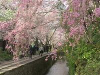 【冬春旅セール】今が旬。初春の風情を味わいに京都・奥東山へ