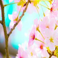 【期間限定】 ★HARUTABI★ 春の道後 湯めぐり&バイキング♪