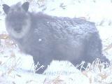 【スノーリゾート】樹氷の森でスノーシューガイドツァー(12月31日,1月1日を除く)